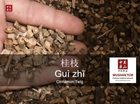 gui zhi
